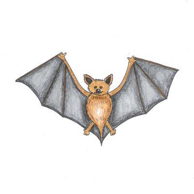 netopyr